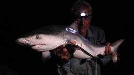 River Monsters - Freshwater Shark