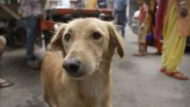 Paul O'grady For The Love Of Dogs: India - Episode 2