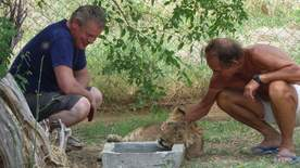 Martin Clunes: My Travels And Other Animals - A Lion Called Mugi