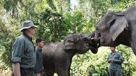 Wild China With Ray Mears - Walking With Elephants