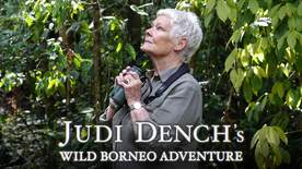 Judi Dench's Wild Borneo Adventure - Episode 1