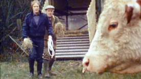Minder - A Lot Of Bull And A Pat On The Back